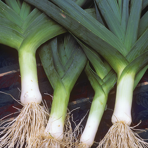 The Leek: Top 5 Ways to Get a Heat Stroke During Summer Vacation