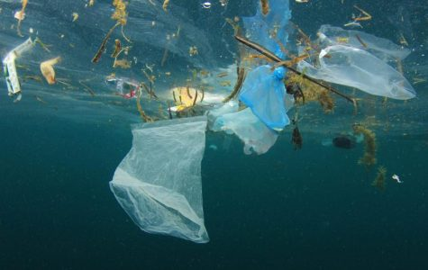 How We Can Stop Plastic Pollution
