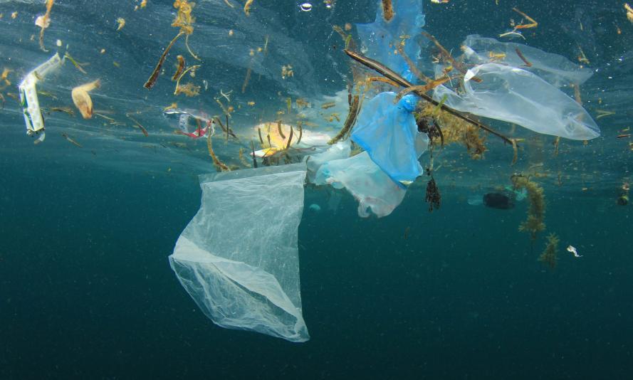 (Image via WWF)