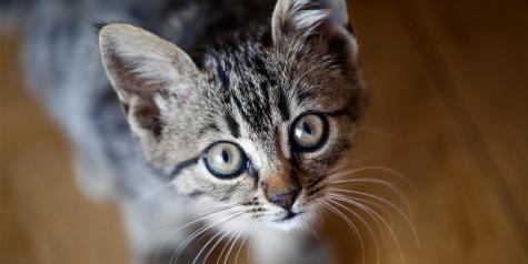 (Image via International Cat Care)